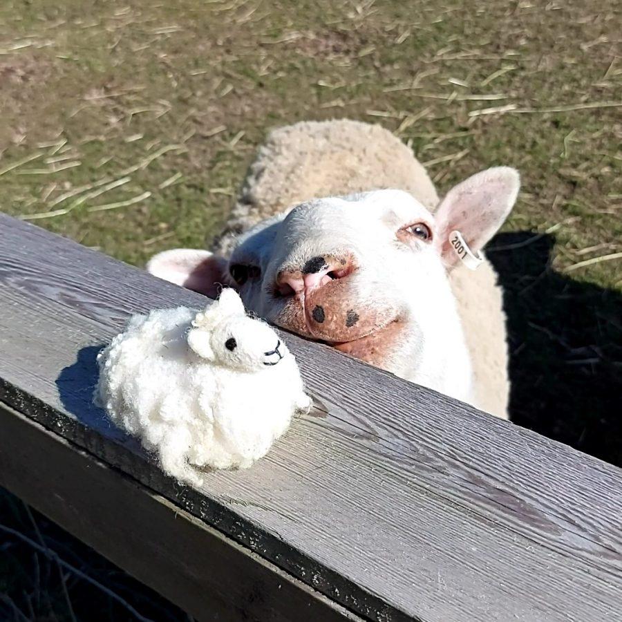 Onni-lammas-defb2ace